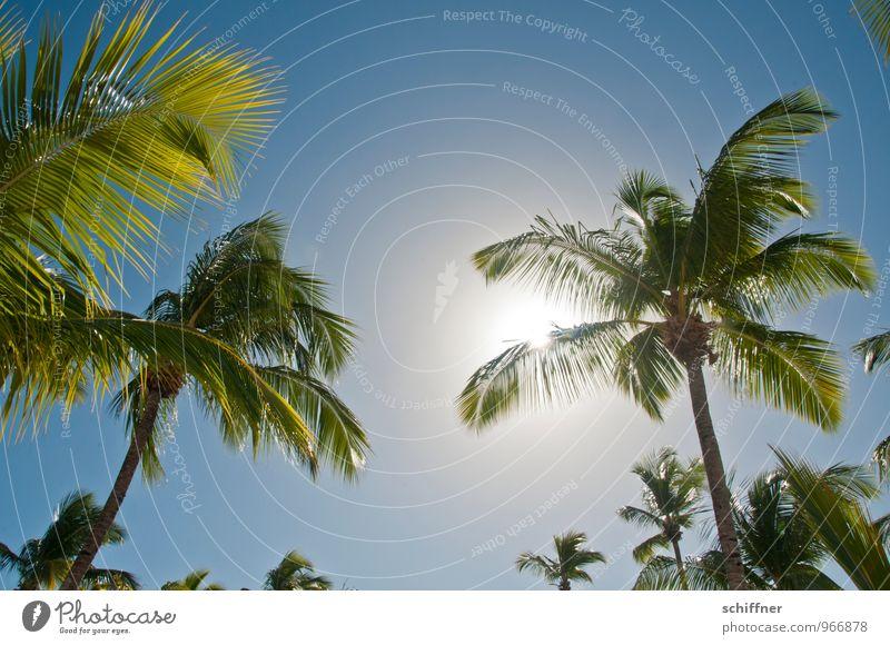 Sonnenbrandverhinderer Natur Himmel Wolkenloser Himmel Sonnenlicht Schönes Wetter Pflanze Baum Grünpflanze exotisch träumen Klischee blau