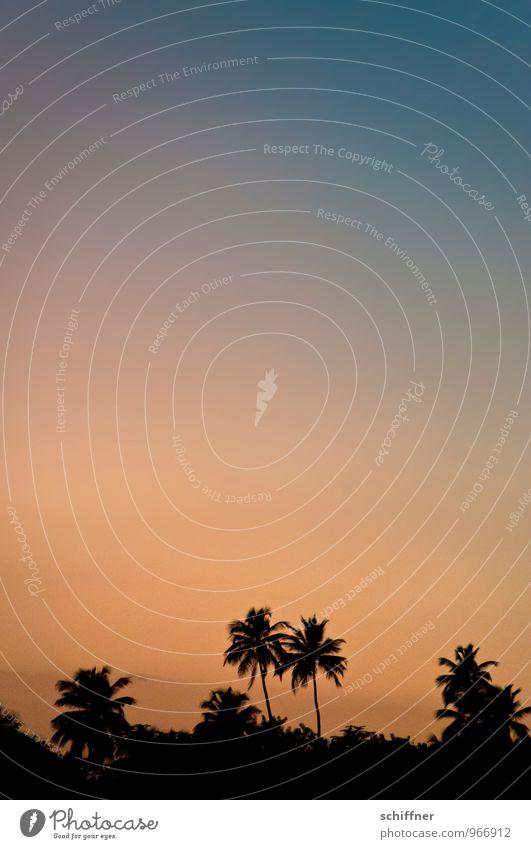 ...und dann schlafen gehen Pflanze Baum dunkel orange schwarz Silhouette Palme Palmenwedel Palmenstrand Palmentapete exotisch Hintergrundbild Dämmerung