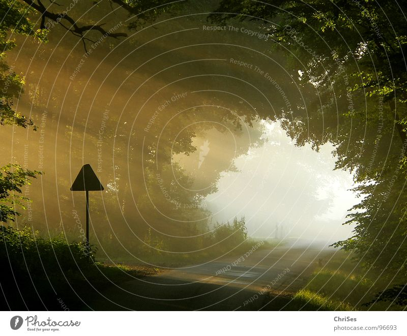 morgens um 6.07 Baum Sonne Sommer Straße Landschaft Wärme Beleuchtung Nebel Schilder & Markierungen Romantik Physik Tunnel Sonnenaufgang Himmelskörper & Weltall