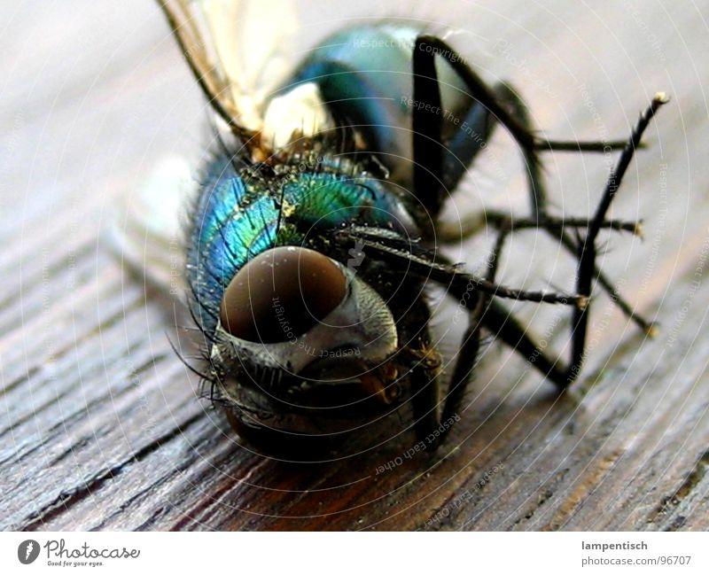 rest in peace grün blau Tod Holz Fliege schlafen liegen Flügel Insekt Müdigkeit rechnen