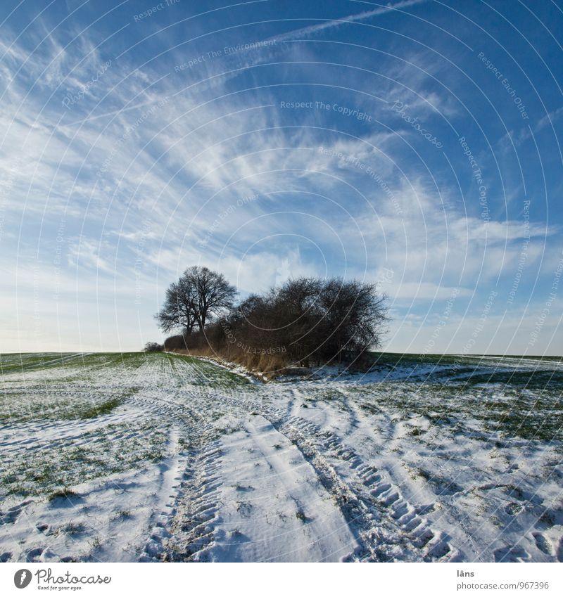 Inseldasein Himmel Winter Frost Schnee Spuren Natur Baum