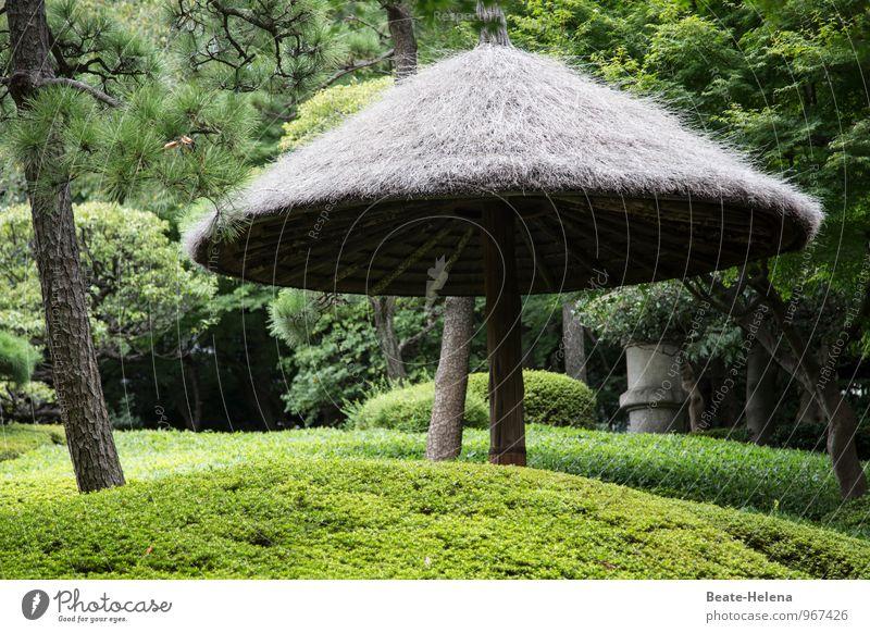Japanische Gartenästhetik grün Baum Erholung ruhig außergewöhnlich Park Wetter Zufriedenheit elegant Sträucher ästhetisch beobachten einfach einzigartig