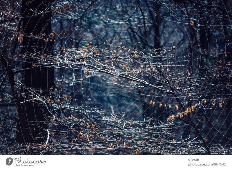 Südpfalz | Verzweigungen Ausflug wandern Umwelt Natur Pflanze Sonnenlicht Herbst Baum Blatt Ast Zweige u. Äste Baumstamm Wald Pfälzerwald dunkel blau Farbfoto