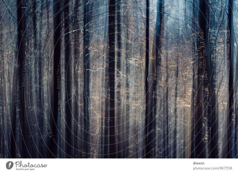 Südpfalz | Waldlicht Umwelt Natur Pflanze Baum Pfälzerwald Wachstum hoch Lichtschein Farbfoto Außenaufnahme Experiment Menschenleer Kontrast Bewegungsunschärfe