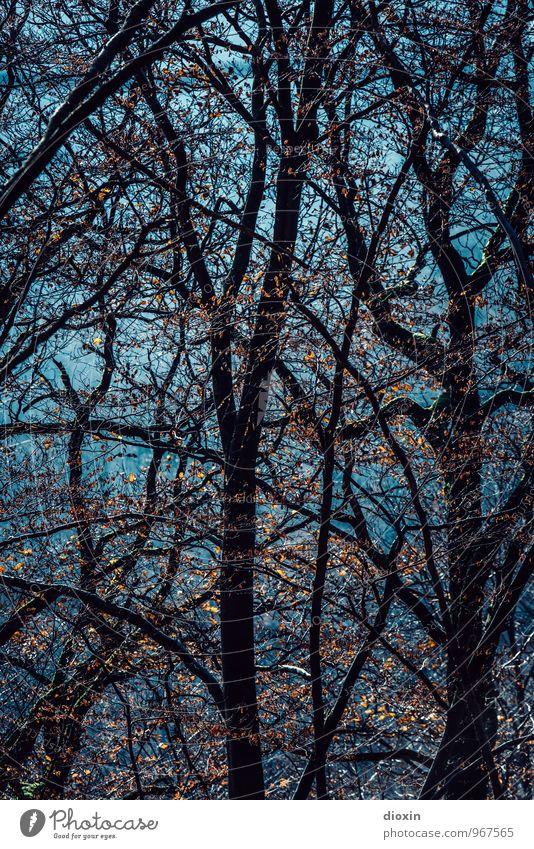 Südpfalz | Geäst Ausflug wandern Umwelt Natur Pflanze Sonnenlicht Herbst Baum Blatt Ast Zweig Zweige u. Äste Baumstamm Wald Pfälzerwald natürlich türkis