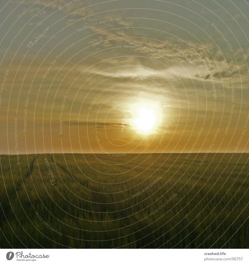 Sundown IV Natur Himmel Sonne grün Sommer gelb Ferne Straße Gras Wärme Linie Beleuchtung Feld Rasen Physik Unendlichkeit