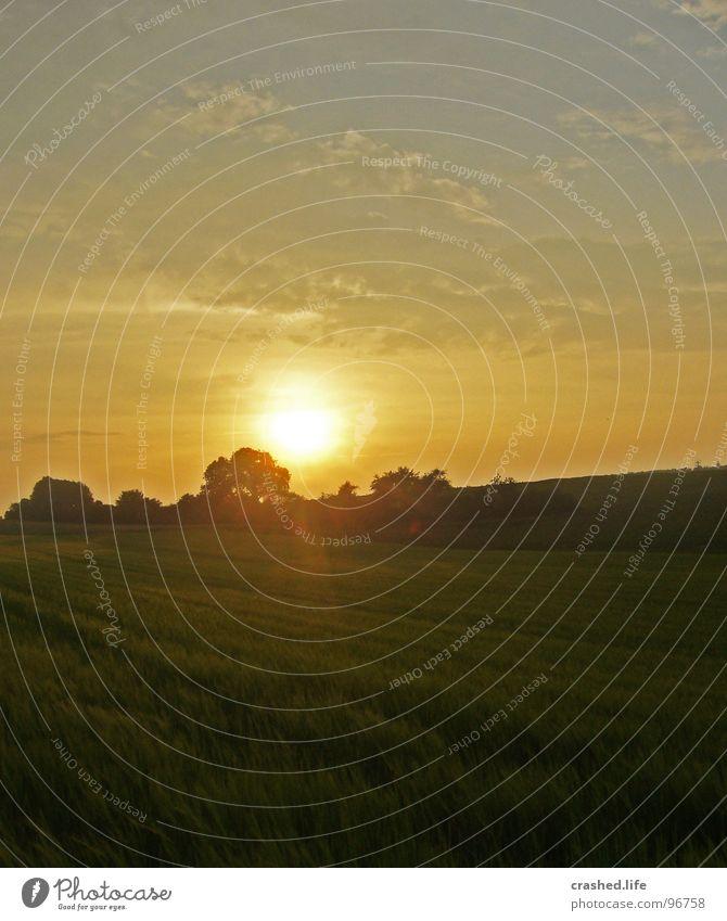 Sundown V Feld Sonnenuntergang Gelbstich gelb grün Gras Ferne Weizen Unendlichkeit Licht Sonnenaufgang Abend Morgen Sonnenstrahlen Sommer Physik Himmel Straße