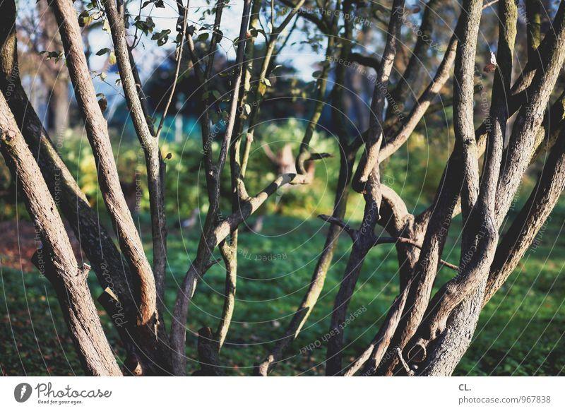 verzweigt Umwelt Natur Schönes Wetter Baum Ast Park Wald komplex Farbfoto Außenaufnahme Menschenleer Tag Licht Schatten Sonnenlicht Schwache Tiefenschärfe