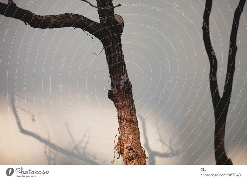 mir fällt leider nichts ein Natur Baum Umwelt Wand Herbst Mauer Wetter Schönes Wetter Baumstamm Zweig Baumrinde