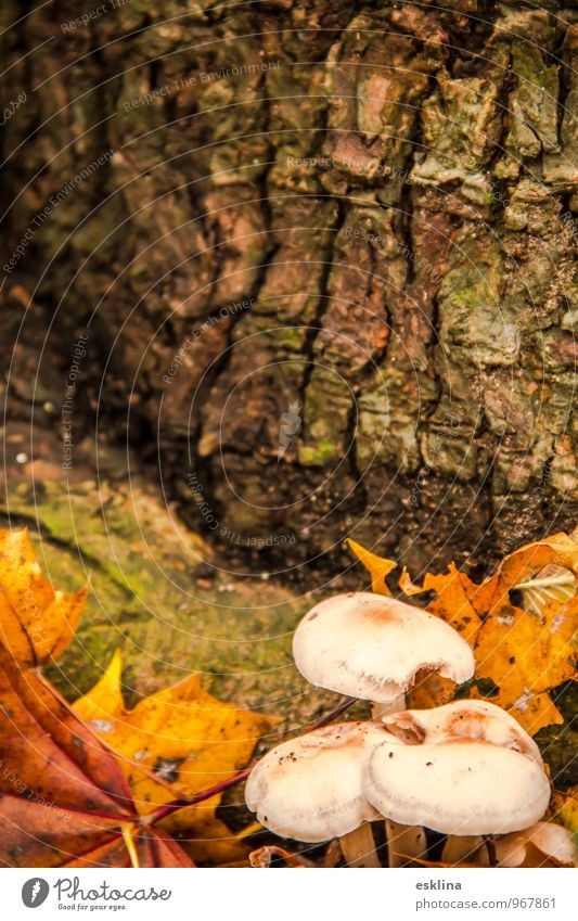 Herbstnische Natur Pflanze Erde Baum Blatt Pilz Wald alt liegen dehydrieren Wachstum einfach klein nah braun gelb grün weiß Stimmung Vorsicht ruhig Umwelt