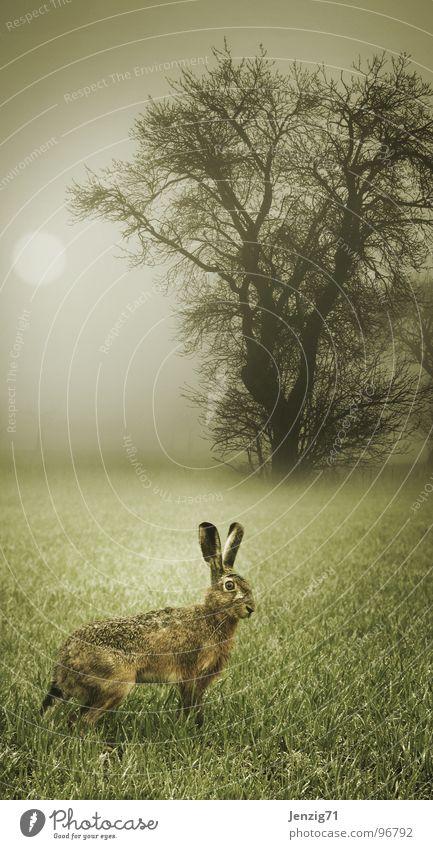 Fluchtgedanken. Wald Herbst Wiese Gras Stimmung Feld Angst Nebel Wetter rennen Säugetier Hase & Kaninchen Natur Morgen
