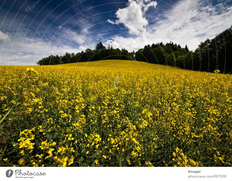 Frühling! Umwelt Natur Landschaft Pflanze Himmel Wolken Horizont Sonne Sonnenlicht Sommer Schönes Wetter Wärme Blume Blatt Blüte Nutzpflanze Raps Rapsfeld Feld