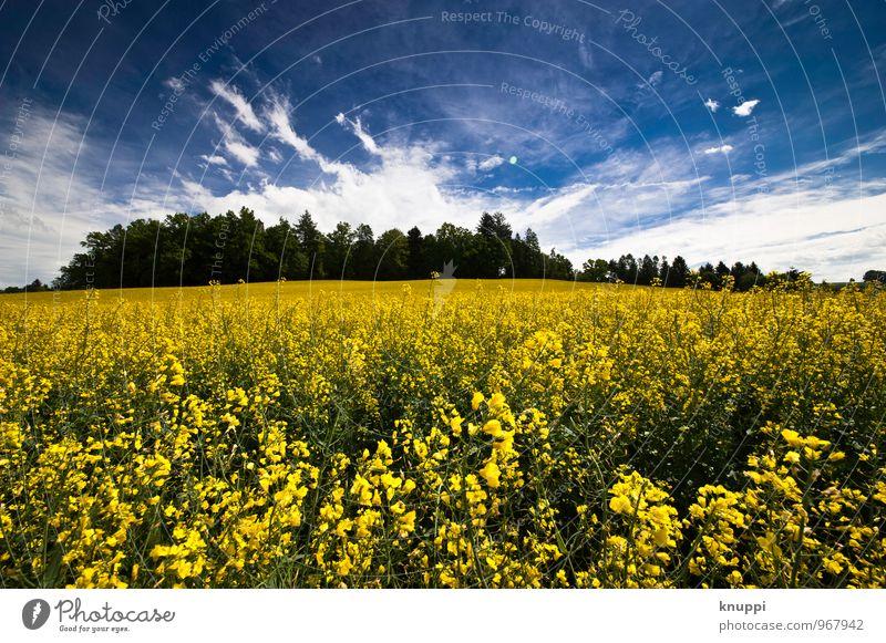 Frühling Umwelt Natur Landschaft Pflanze Himmel Wolken Sonne Sonnenlicht Wetter Schönes Wetter Wärme Baum Blume Blatt Blüte Nutzpflanze Raps Rapsfeld Rapsanbau