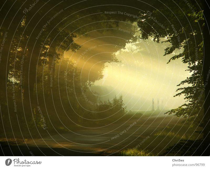 morgens um 6.08 Nebel Morgen Sonnenaufgang Physik Baum Tunnel Romantik Sommer Himmelskörper & Weltall Beleuchtung wonnegefühl Wärme Straße Landschaft Kontrast