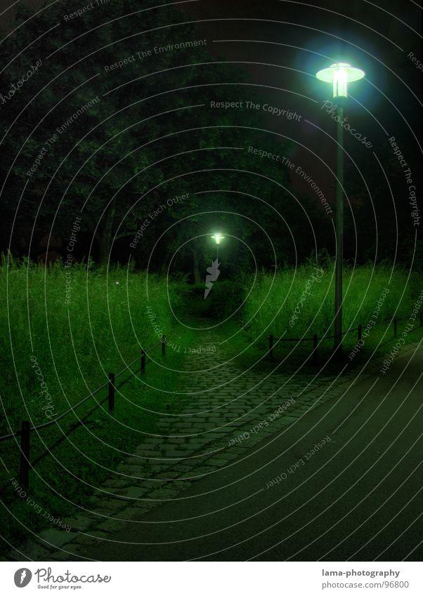 Folge dem Licht Gasse Abzweigung schäbig Wiese Spaziergang Nacht dunkel unheimlich Gras Halm Schilfrohr Sträucher Löwenzahn grün Straßenbeleuchtung Laterne