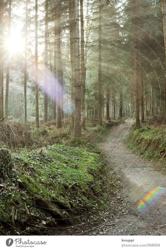 sunshine Natur grün weiß Sommer Sonne Baum Landschaft Wald Umwelt gelb Wärme Frühling grau Gesundheit braun Luft