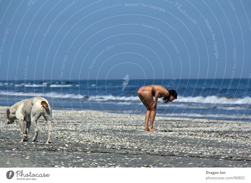 Searching Strand Himmel dog waves blue sky funny cute ingenious