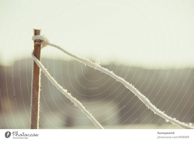locker festgebunden Winter Klima Schönes Wetter Eis Frost Holz Beginn Stress Zaun Zaunpfahl Raureif Eisblumen Schnur Gedeckte Farben Außenaufnahme