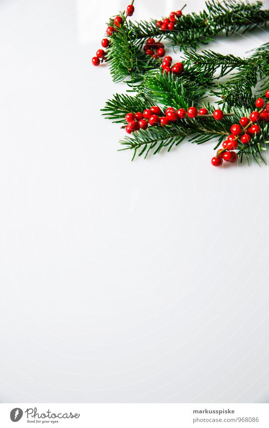 weihnachts decoration stechpalme elegant Stil Häusliches Leben Wohnung Innenarchitektur Dekoration & Verzierung Weihnachten & Advent Pflanze Tannennadel