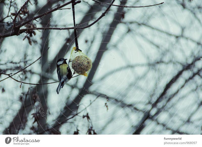 Futter. Jetzt. Umwelt Natur Pflanze Tier Klima Klimawandel Baum Wildtier Vogel Meisen Kohlmeise Singvögel 1 Essen füttern Meisenknödel Futterknödel Vogelfutter