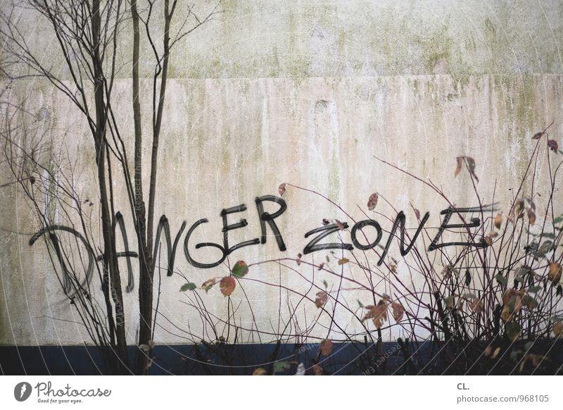 gefahrenzone Natur Herbst Baum Sträucher Blatt Ast Mauer Wand Schriftzeichen Graffiti dreckig trist gefährlich Zerstörung Risiko Farbfoto Gedeckte Farben