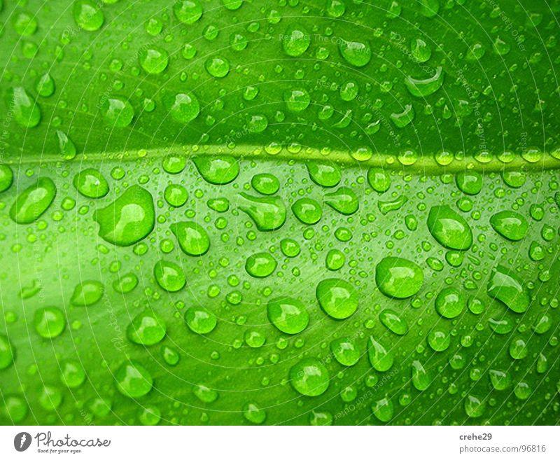 Verperlung grün Sommer Wasser Blatt Regen Wassertropfen nass Palme feucht Durst gießen Palmenwedel