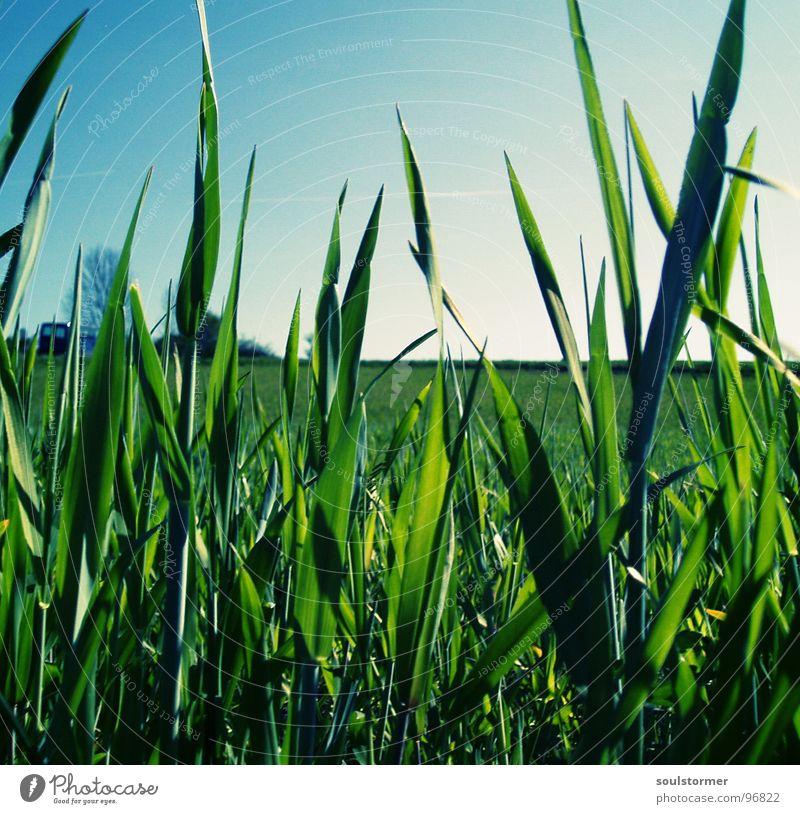 ganz unten Himmel Blume grün blau Pflanze ruhig Erholung Wiese Zufriedenheit Rasen Frieden Schönes Wetter Prima einzeln himmlisch