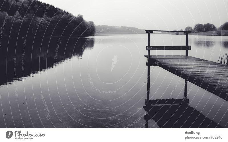 in sich gehen. Reflexion Umwelt Natur Landschaft Wasser Wolkenloser Himmel Sommer schlechtes Wetter Wald See dunkel kalt Vorsicht Gelassenheit ruhig Traurigkeit