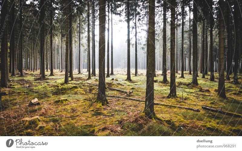 crossing lines. Umwelt Natur Landschaft Pflanze Sonnenlicht Sommer Herbst Klima Baum Wald groß hoch kalt saftig Sauberkeit wild braun gelb grau grün