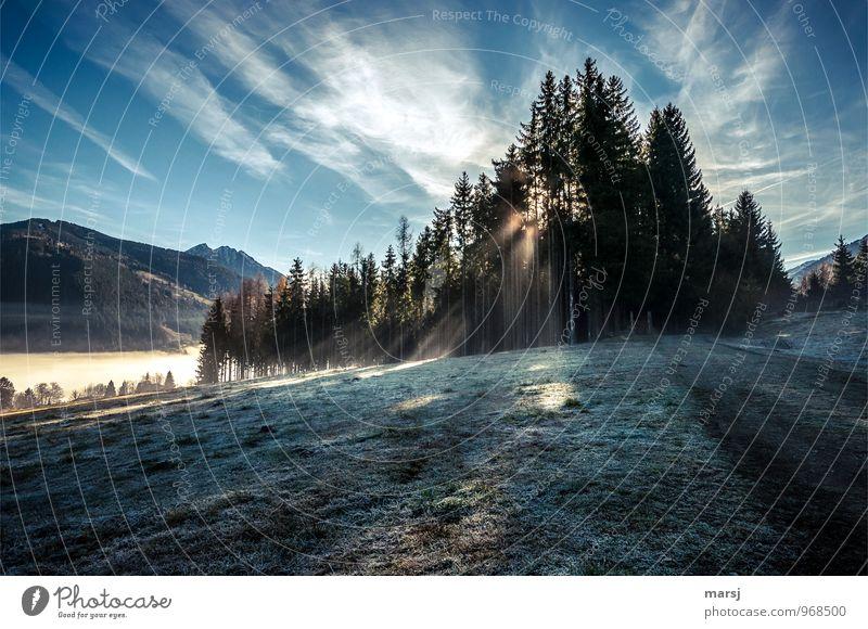 Einen wunderschönen guten Morgen... Himmel Natur Ferien & Urlaub & Reisen Landschaft ruhig Wolken Wald kalt Herbst Wiese Freiheit Eis Zufriedenheit leuchten