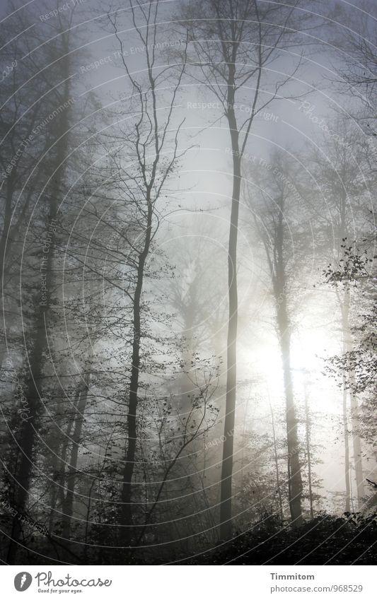 Ein gutes Jahr! Himmel Natur blau Pflanze Sonne Landschaft schwarz dunkel Wald Umwelt Herbst Gefühle natürlich grau Glück hell