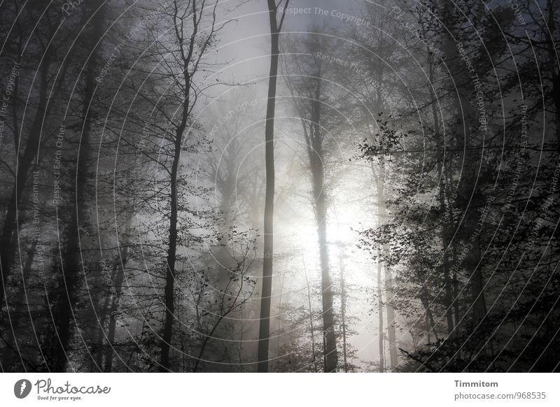 Nebelgrenze. Natur blau Pflanze weiß Sonne Baum ruhig schwarz Wald Umwelt Herbst Gefühle natürlich Holz hell