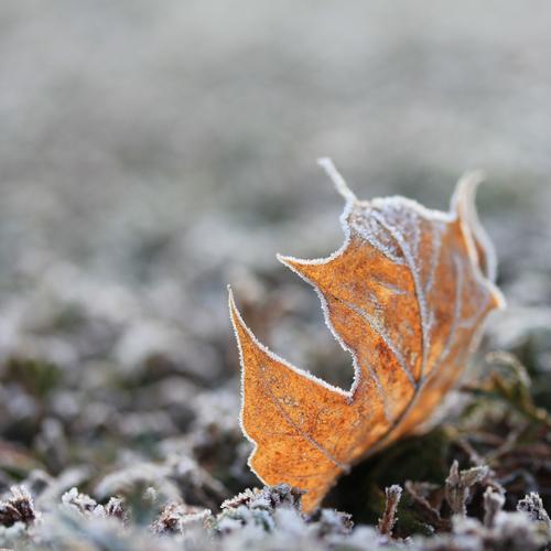 kalt | mit Zuckerrand... Natur Pflanze schön weiß Blatt Winter Umwelt Leben natürlich klein grau außergewöhnlich braun liegen