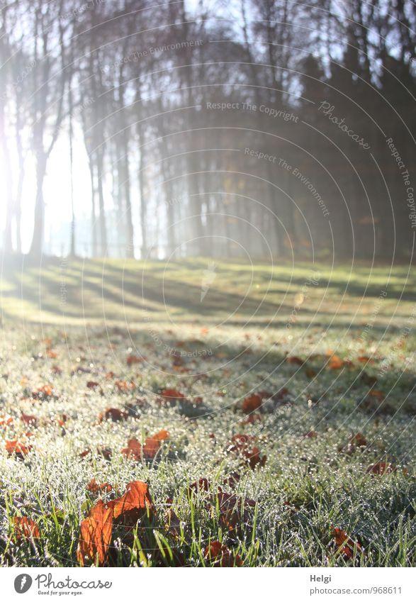 Novembermorgen... Umwelt Natur Landschaft Pflanze Wassertropfen Winter Schönes Wetter Eis Frost Baum Gras Blatt Wiese Wald glänzend leuchten liegen stehen