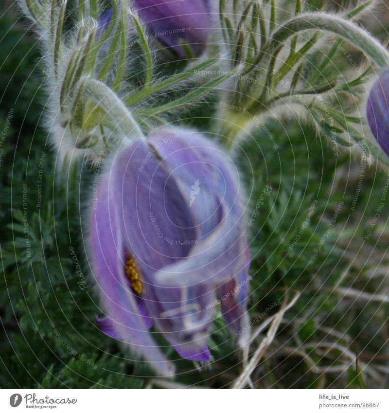 mein_name_ist_?_ Natur Blume weich Vergänglichkeit einzigartig zart anonym nervig Akzeptanz leider Problemzone