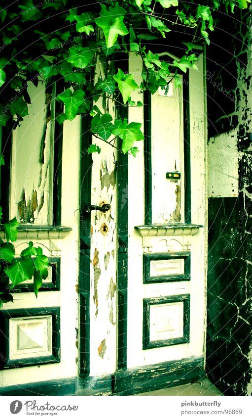 Wohin führt wohl diese Tür??? Schlüsselloch Altbau Griff Ruine dreckig weiß grün geheimnisvoll Außenaufnahme verfallen Efeu Pflanze Türrahmen Durchgang Eingang
