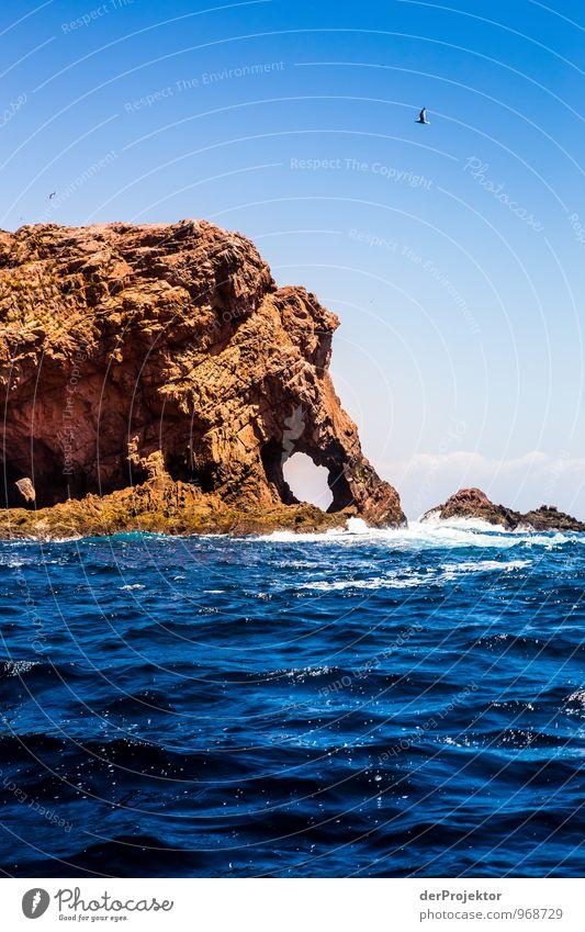 Elefant schäumt Meer auf Natur Ferien & Urlaub & Reisen blau Sommer Landschaft Freude Tier Ferne Umwelt Gefühle Küste Freiheit Felsen Freizeit & Hobby Wellen