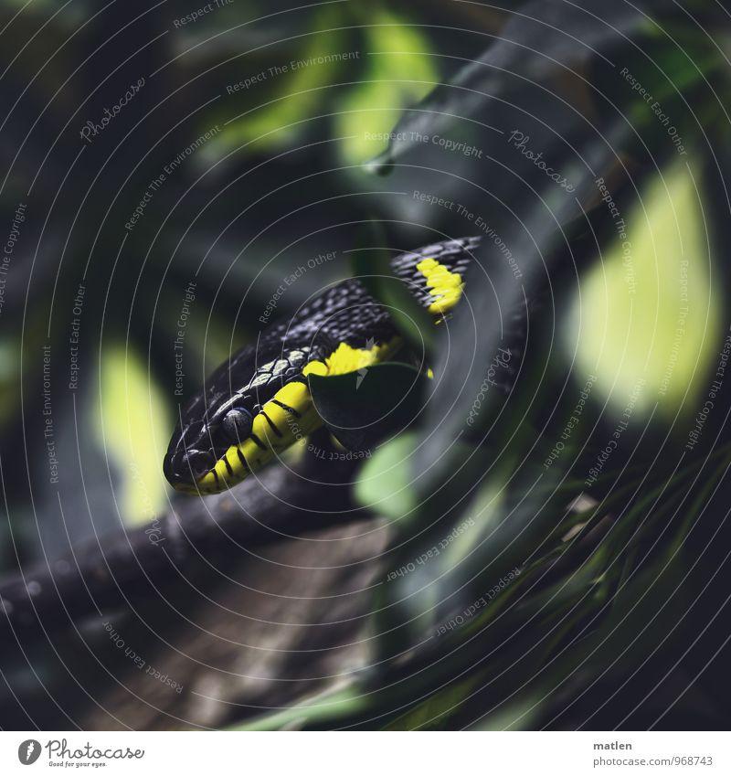 camouflaged Pflanze Baum Tier schwarz gelb braun Schlange Tarnung abrupt