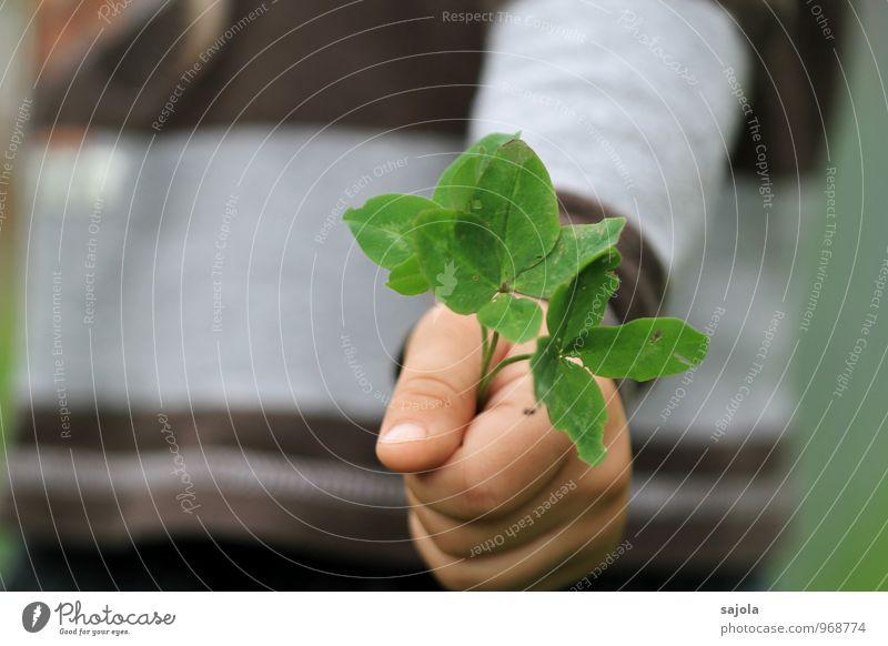 glück³ Mensch androgyn Kind Kleinkind Hand 1 1-3 Jahre Umwelt Pflanze Grünpflanze Nutzpflanze Klee Kleeblatt festhalten Glück schenken geben zeigen vierblättrig