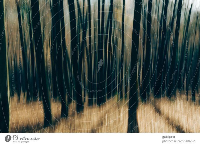 Südpfalz | wirrwarr Natur Landschaft Baum Wald bedrohlich dunkel Angst Platzangst Zukunftsangst gefährlich Verzweiflung Nervosität verstört Stress bizarr