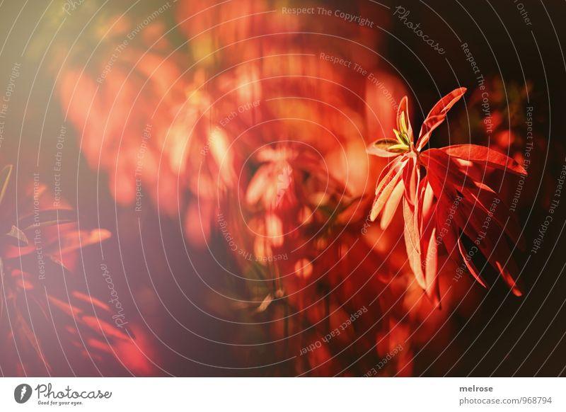 Blick durch den Zaun Natur Pflanze Herbst Schönes Wetter Blatt Wildpflanze rot leuchtende Blätter Garten Park Reflexion & Spiegelung Unschärfe Linien Gitterzaun