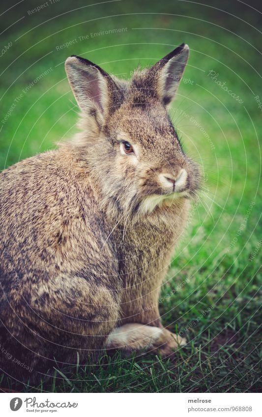 treuherzig grün Erholung Tier Herbst Wiese Gras Garten braun Zufriedenheit Idylle beobachten berühren Freundlichkeit Neugier Fell Tiergesicht