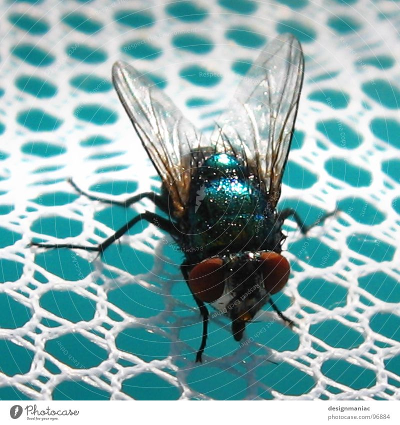 Eine auf einen Streich weiß schwarz Auge klein Beine Wellen groß warten Fliege Flügel Schnur Schwimmbad Netz Insekt lecker Loch