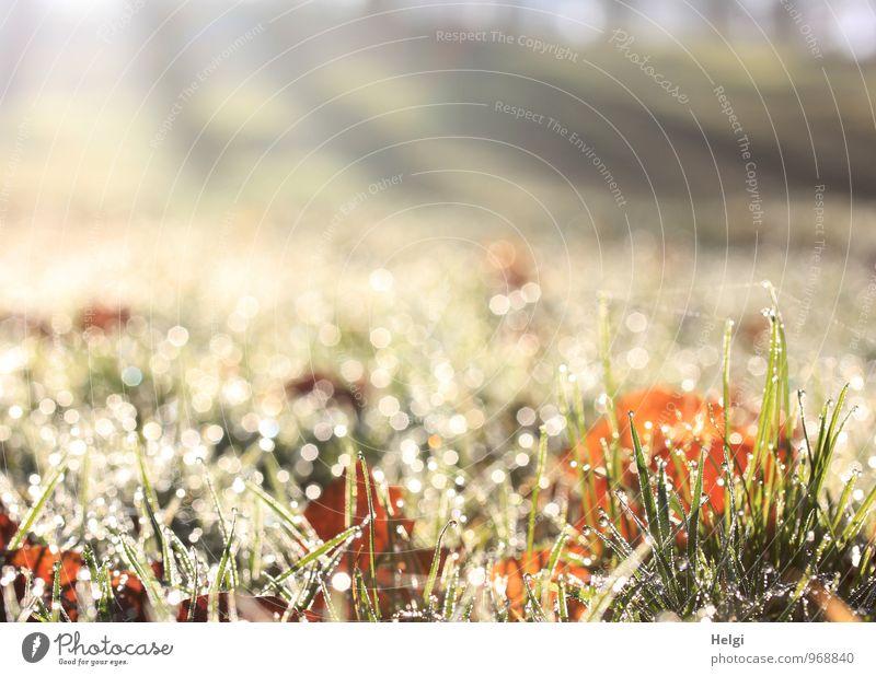 1000 | ...lichte Momente... Natur Pflanze grün weiß Einsamkeit Blatt Landschaft ruhig kalt Umwelt Herbst Wiese Gras natürlich grau außergewöhnlich
