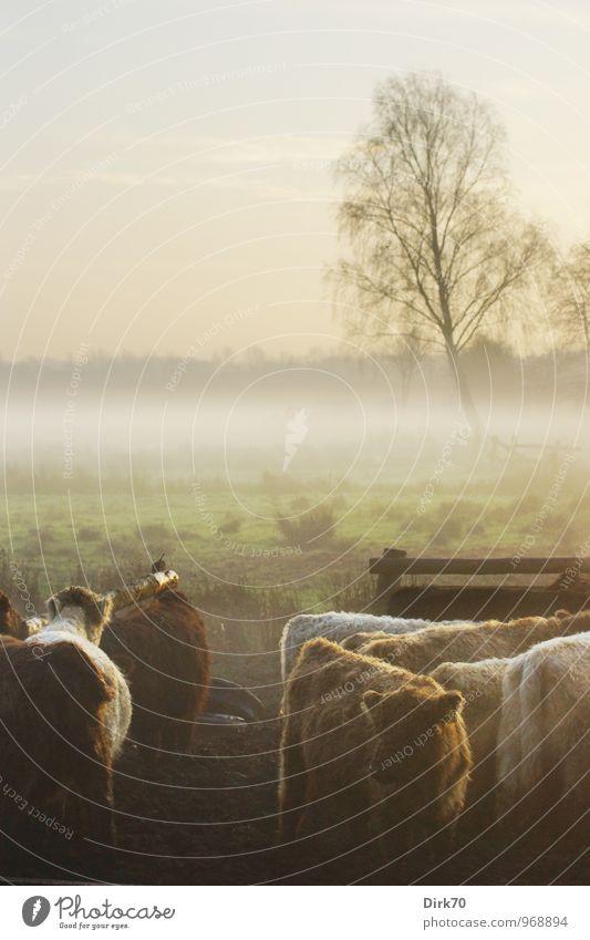 Sieben auf einer Weide grün weiß Baum Landschaft Tier schwarz kalt Umwelt Herbst Wiese grau braun Stimmung Feld Idylle Nebel