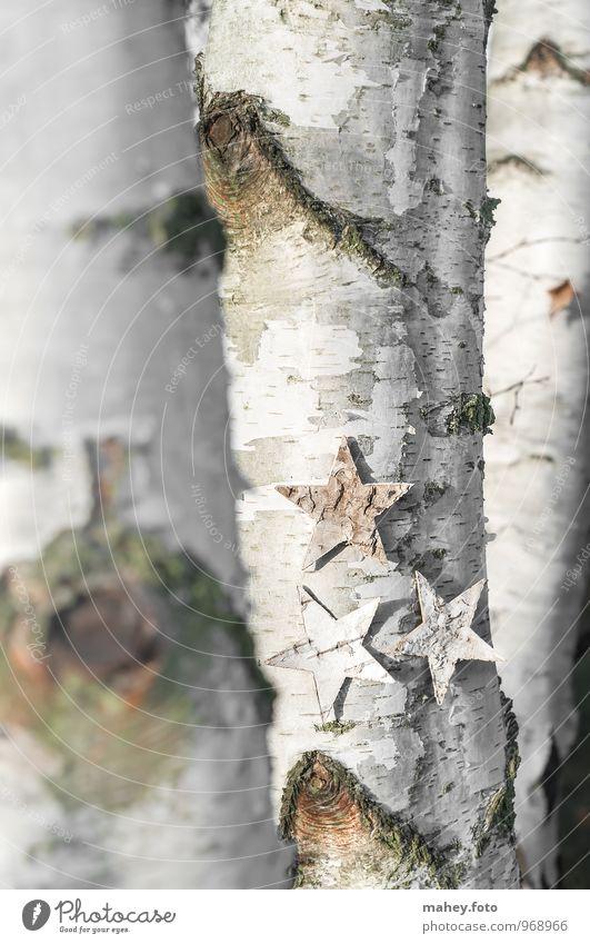 Sternenbaum Natur Weihnachten & Advent Baum Wald natürlich Hintergrundbild Stern (Symbol) Jahreszeiten Baumstamm dünn Baumrinde Oberfläche vertikal Birke