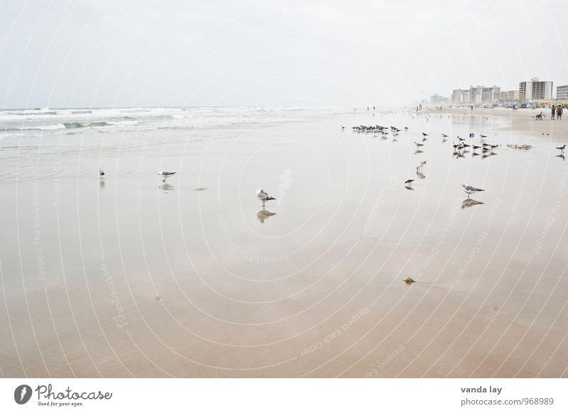 Daytona Ferien & Urlaub & Reisen Ferne Sommer Sommerurlaub Strand Meer Daytona Beach Florida USA Wellen Küste Tier Möwe Tiergruppe Schwarm frei Farbfoto