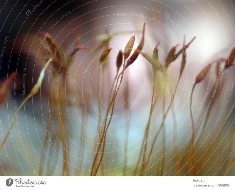 Microcosmos Natur Pflanze Stengel Halm Korn Samen durcheinander filigran