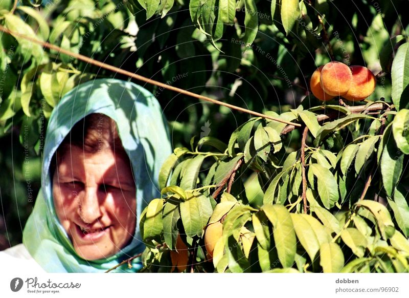 zurück... Frau Natur alt grün blau Pflanze Sommer Freude Gesicht Blatt Leben Erholung Arbeit & Erwerbstätigkeit Garten lachen Kopf