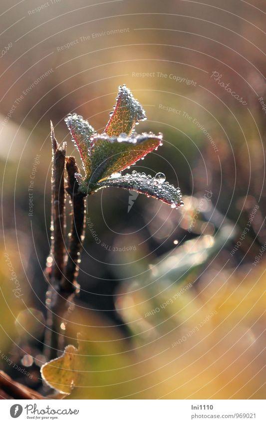 Morgen im November Umwelt Natur Pflanze Luft Wasser Wassertropfen Sonne Sonnenaufgang Sonnenuntergang Sonnenlicht Herbst Schönes Wetter Eis Frost Blatt
